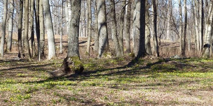 Skogbunnen var gulspraglet
