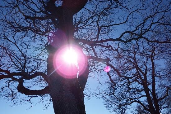 Når påskesola er så kraftig at den splintrer trær #denfølelsen